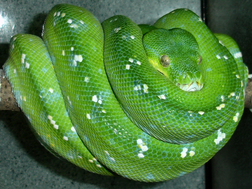 Molecular Reptile Online Snakes And Information